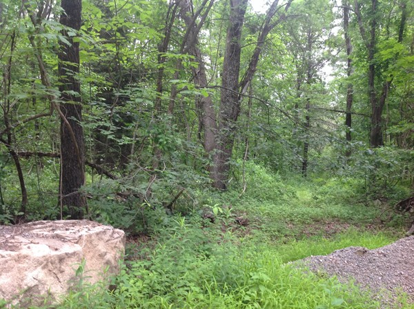 Four wooded acres for you new home!
